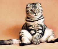 Best Cat Friendly Cities